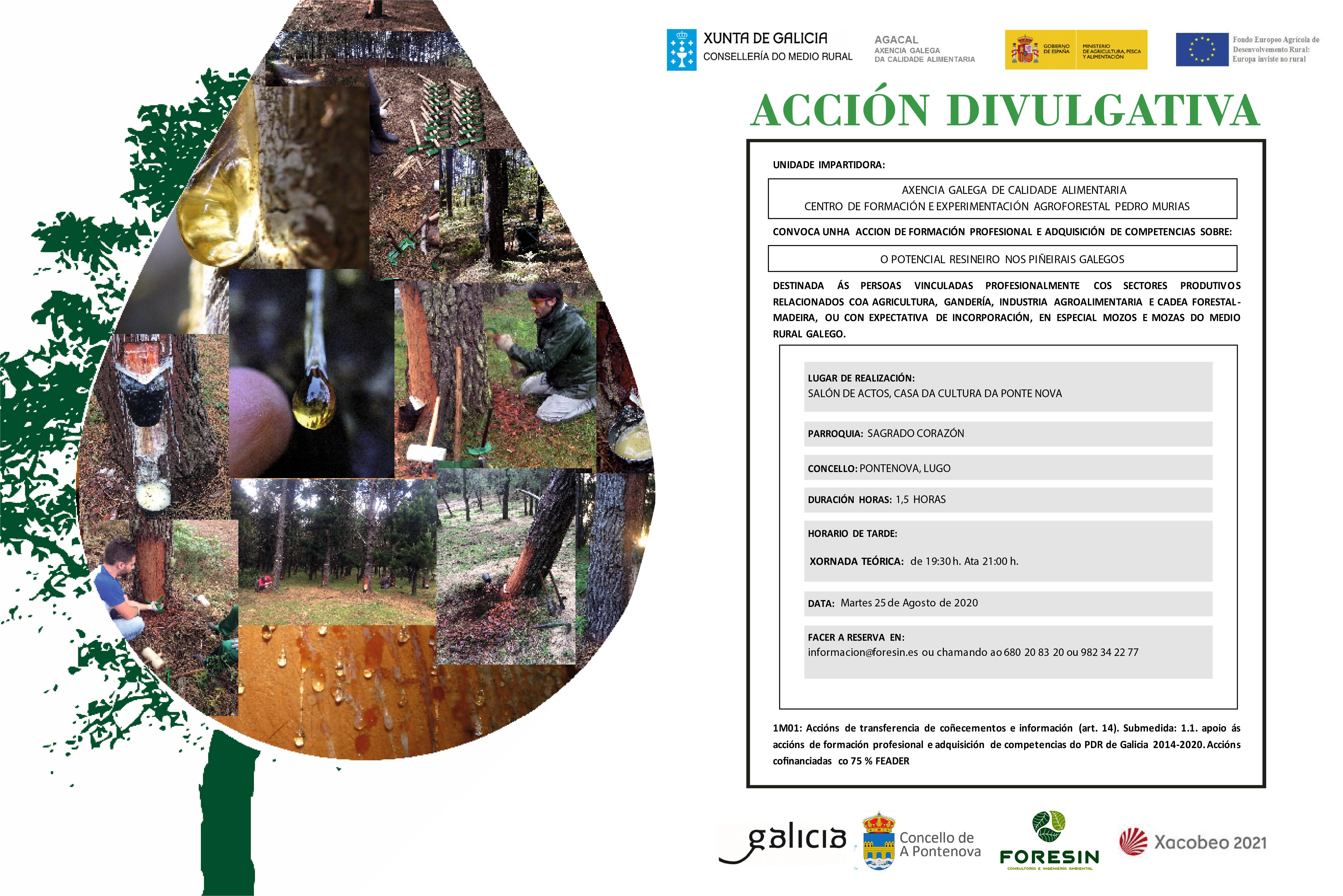 ACCIÓN DIVULGATIVA – EL POTENCIAL RESINERO DE LOS PINARES GALLEGOS